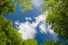 Зеленые листва и небо Стоковое Изображение RF