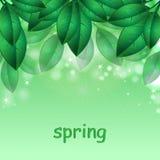 Зеленые листья весны Стоковое Изображение RF