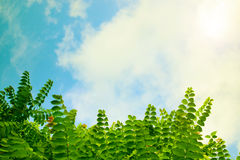 Зеленые листья дерева против неба Стоковые Изображения RF