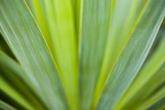 Зеленые листья завода Стоковые Фотографии RF