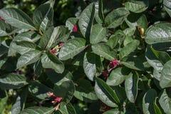Зеленые листья и красные цветки Стоковые Фотографии RF