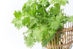 Зеленые листья кориандра в корзине Стоковое Изображение