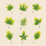Зеленые листья осени иллюстрация вектора