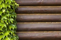 зеленые листья плюща Стоковое Фото