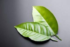 зеленые листья Стоковое фото RF