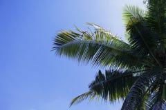 Зеленые лист ладони на предпосылке голубого неба Тропическое небо лета Троповое фото природы острова Стоковые Фотографии RF