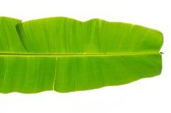 Зеленые лист банана Стоковая Фотография RF