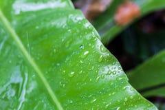 Зеленые лист дерева в природе Стоковое Фото