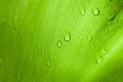 Зеленые лист дерева в природе Стоковые Изображения RF