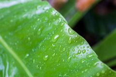 Зеленые лист дерева в природе Стоковое фото RF