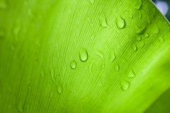 Зеленые лист дерева в природе Стоковые Изображения