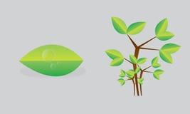 Зеленые лист и дерево стоковое изображение rf