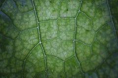 Зеленые лист как городок Стоковая Фотография RF