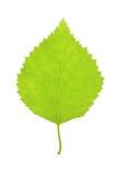 Зеленые лист на белизне Стоковые Изображения