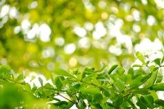 Зеленые лист на красивом зеленом цвете Стоковая Фотография RF