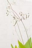 Зеленые лист на стене Стоковая Фотография RF