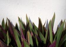 Зеленые лист на стене Стоковые Фотографии RF