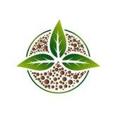 Зеленые лист осеменяют завод роста Стоковые Изображения
