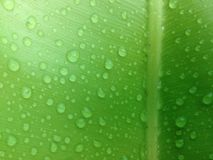 зеленые лист с водой падения Стоковые Фото