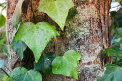 Зеленые лист с падениями воды в природе Стоковые Фото