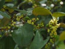 Зеленые лист яблока обезьяны стоковое фото rf