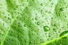 Зеленые лист Стоковые Изображения RF
