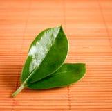 Зеленые лист Стоковое фото RF