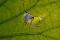 Зеленые лист Стоковые Изображения