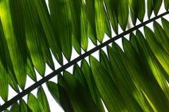 Зеленые лист 1 Стоковые Фотографии RF