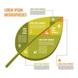 Зеленые лист - Vector концепция Infographic с значками Стоковое Изображение