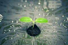Зеленые ИТ Стоковое фото RF