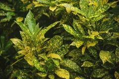 Зеленые и желтые листья стоковая фотография