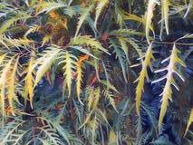 Зеленые и золотые листья крупного плана тропического завода отображают для предпосылки Стоковое Изображение RF