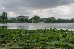 Зеленые лилии воды выходят, поверхность воды озера и пейзаж зданий гостиниц на переднем плане - сценарный Стоковая Фотография RF