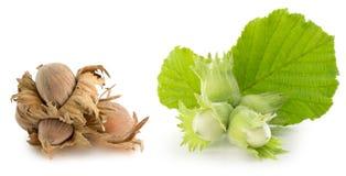 Зеленые и коричневые фундуки на белой предпосылке стоковые фотографии rf