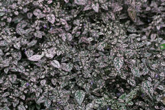Зеленые и розовые заводы Стоковое Изображение