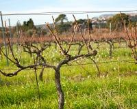 Зеленые и цветя поля и виноградники в Франции в лете Стоковые Фотографии RF