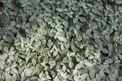 Зеленые и черные листья Стоковое Фото