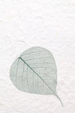 Зеленые каркасные лист стоковое фото rf