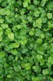 зеленые кальсоны Стоковые Фотографии RF