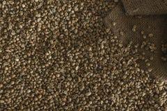 Зеленые кофейные зерна Стоковая Фотография
