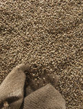 Зеленые кофейные зерна Стоковая Фотография RF