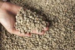 Зеленые кофейные зерна Стоковое фото RF
