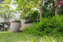 Зеленые кустарники на траве в саде Стоковые Изображения
