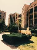 Зеленые кусты и здания Стоковая Фотография RF