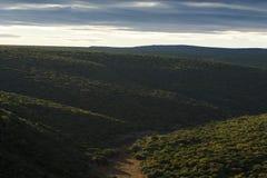 Зеленые кусты - парк живой природы Стоковое Изображение RF