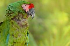 Зеленые обои #2 ары Стоковые Фото