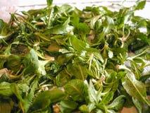 Зеленые овощи салата Стоковые Изображения