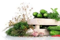 Зеленые огурцы в коробке при специи для сохранять изолированные на белой предпосылке Стоковое Изображение
