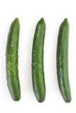 Зеленые огурцы стоковые фото